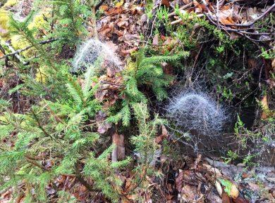Irre Spinnennetze