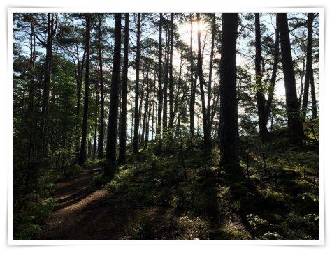 Die Sonne scheint durch die Bäume