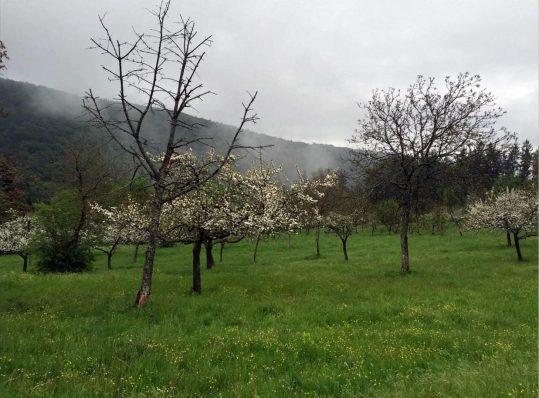 Obstgarten