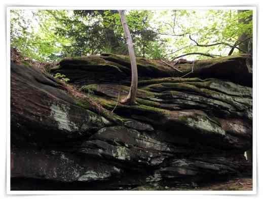 Ein Baum wächst aus dem Felsen