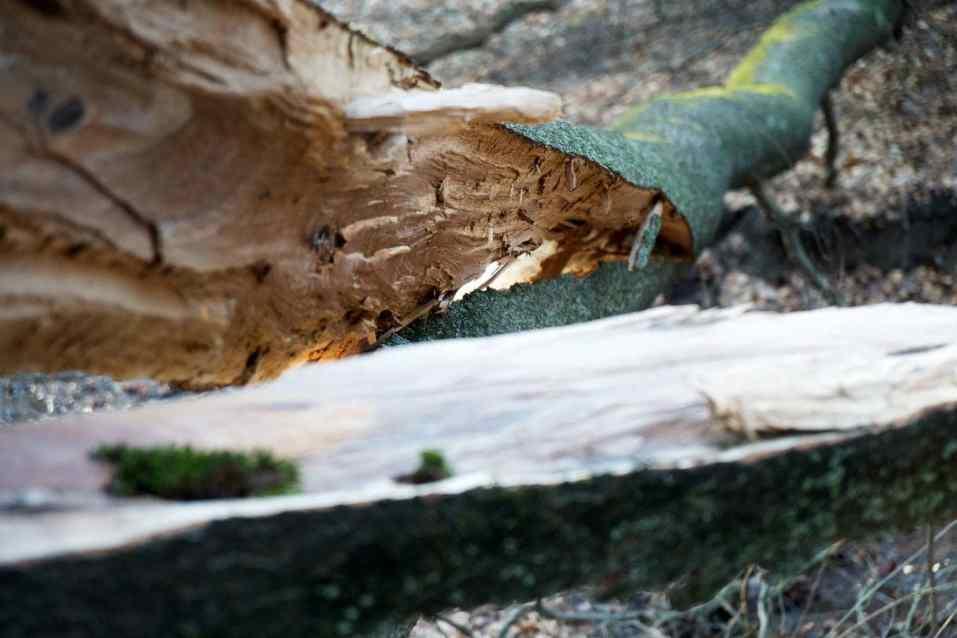 abgeknickter Baum