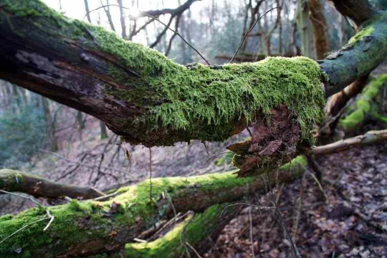 Moos auf einem Baum