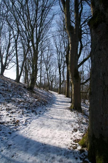 Waldweg mit Schnee