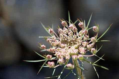GR 221 Refugi Son Amer (Lluc) - Pollença_36