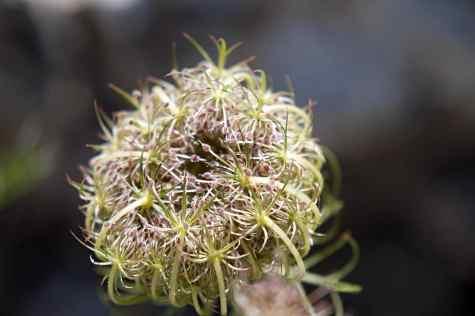 GR 221 Refugi Son Amer (Lluc) - Pollença_38