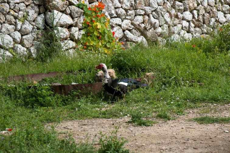 GR 221 Sant Elm - Ses Fontanelles1_3