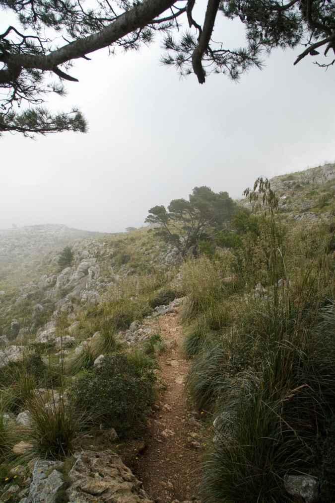 GR 221 Sant Elm - Ses Fontanelles_104