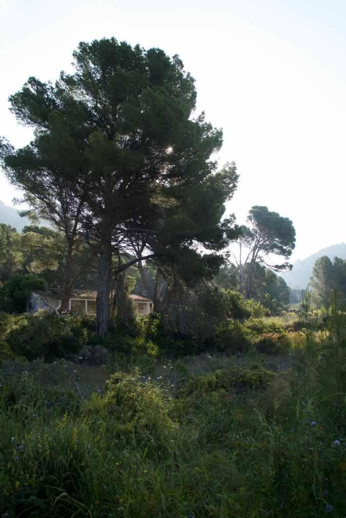 GR 221 Sant Elm - Ses Fontanelles_12