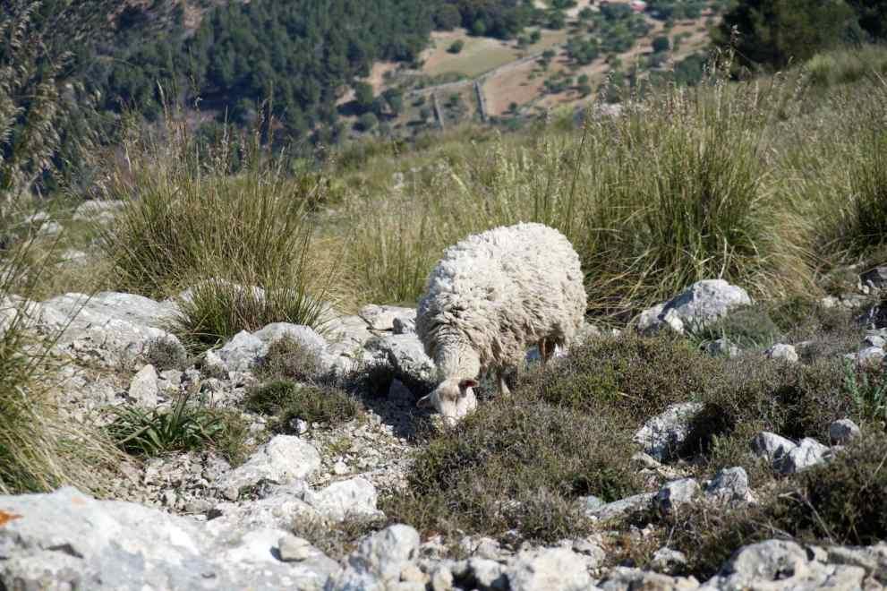 GR 221 Ses Fontanelles - Estellencs_58
