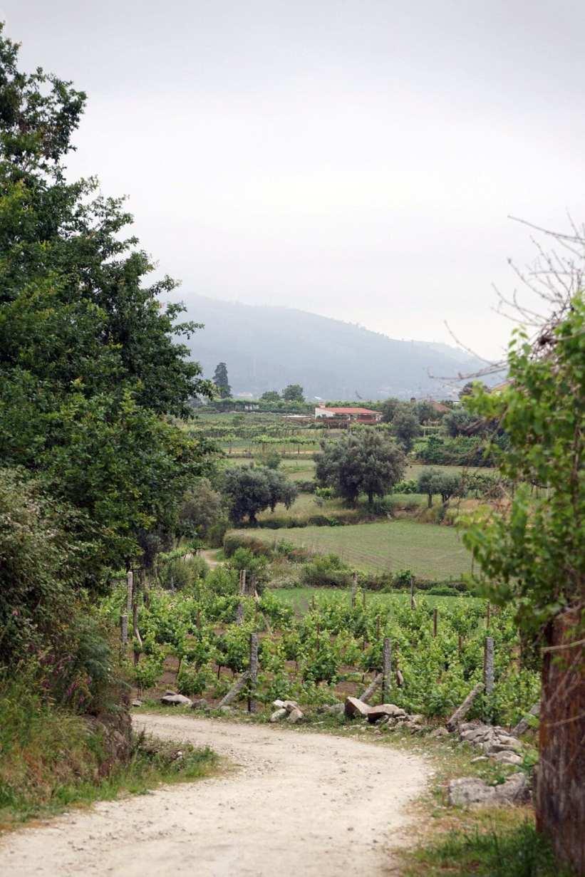 Camino Português DSC01443