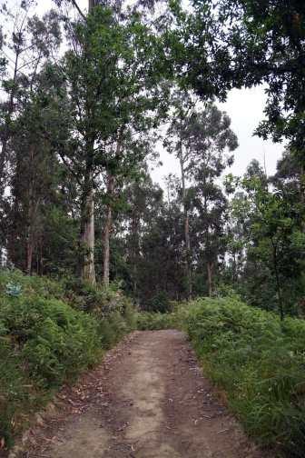 Camino Português DSC01451