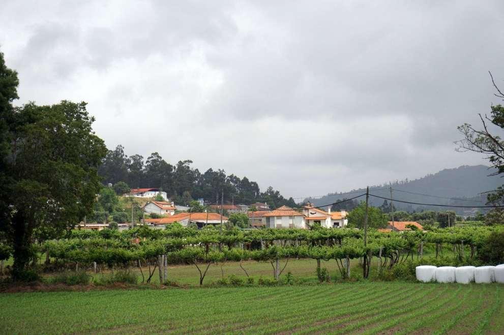 Camino Português DSC01462