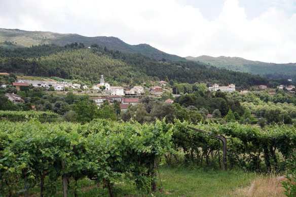 Camino Português DSC01511