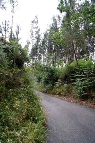 Camino Português DSC01587