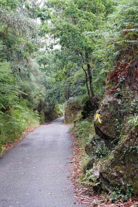 Camino Português DSC01588