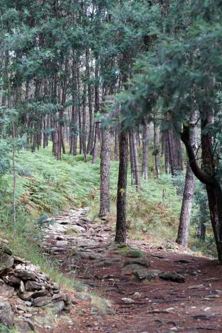 Camino Português DSC01597
