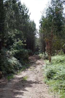 Camino Português DSC01605