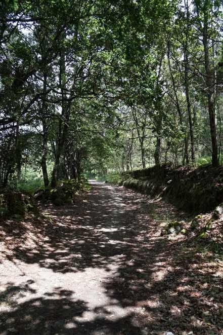 Camino Português DSC01612