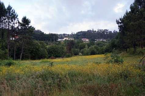 Camino Português DSC01639