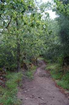 Camino Português DSC01647