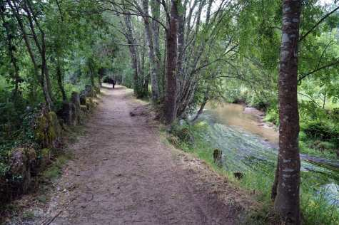 Camino Português DSC01751