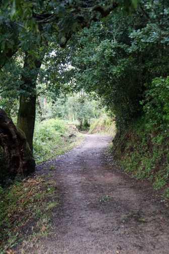 Camino Português DSC01812