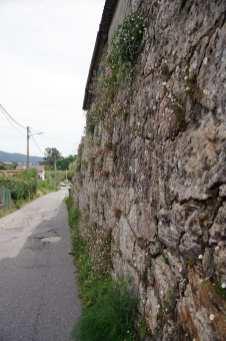 Camino Português DSC01914