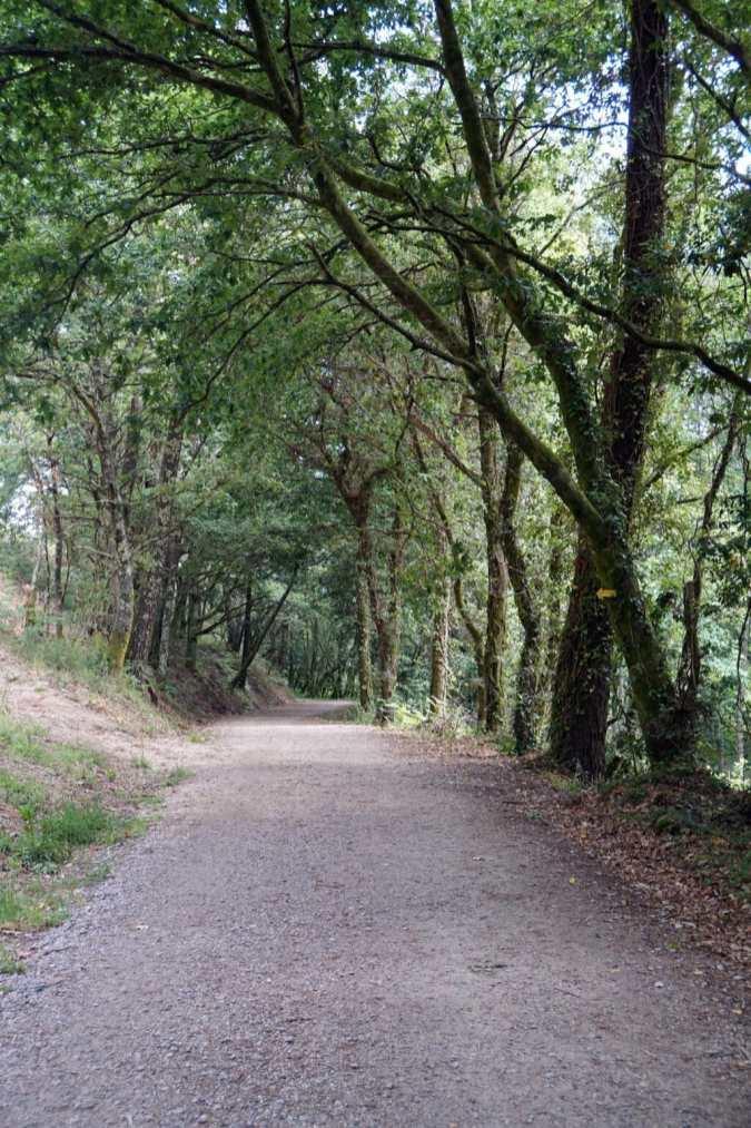 Camino Português DSC02010