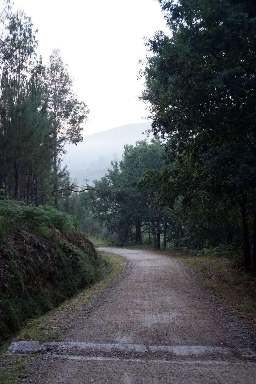 Camino Português DSC02019