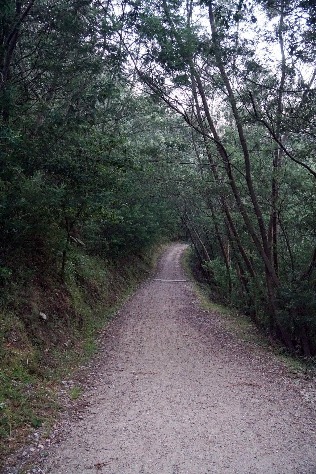 Camino Português DSC02020