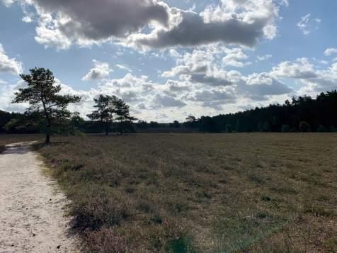 Wandern in der Südheide IMG_4329