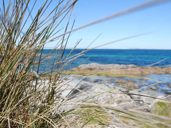 marram grass and sand