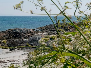 cottage_coastalfoliage