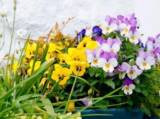 bbc_flowers