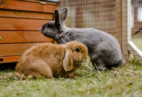 15 rabbit facts you