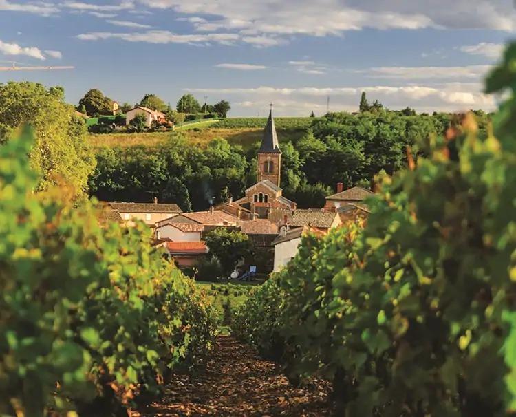 provencespain_Beaujolais_ss_1474