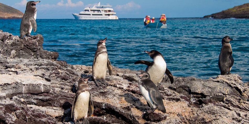 1-Galapagos-Penguins-Sea-Star-Journey