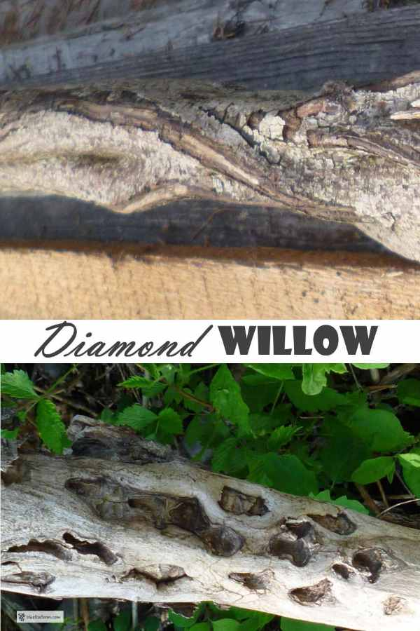 Diamond Willow unusual growth makes for a unique craft material