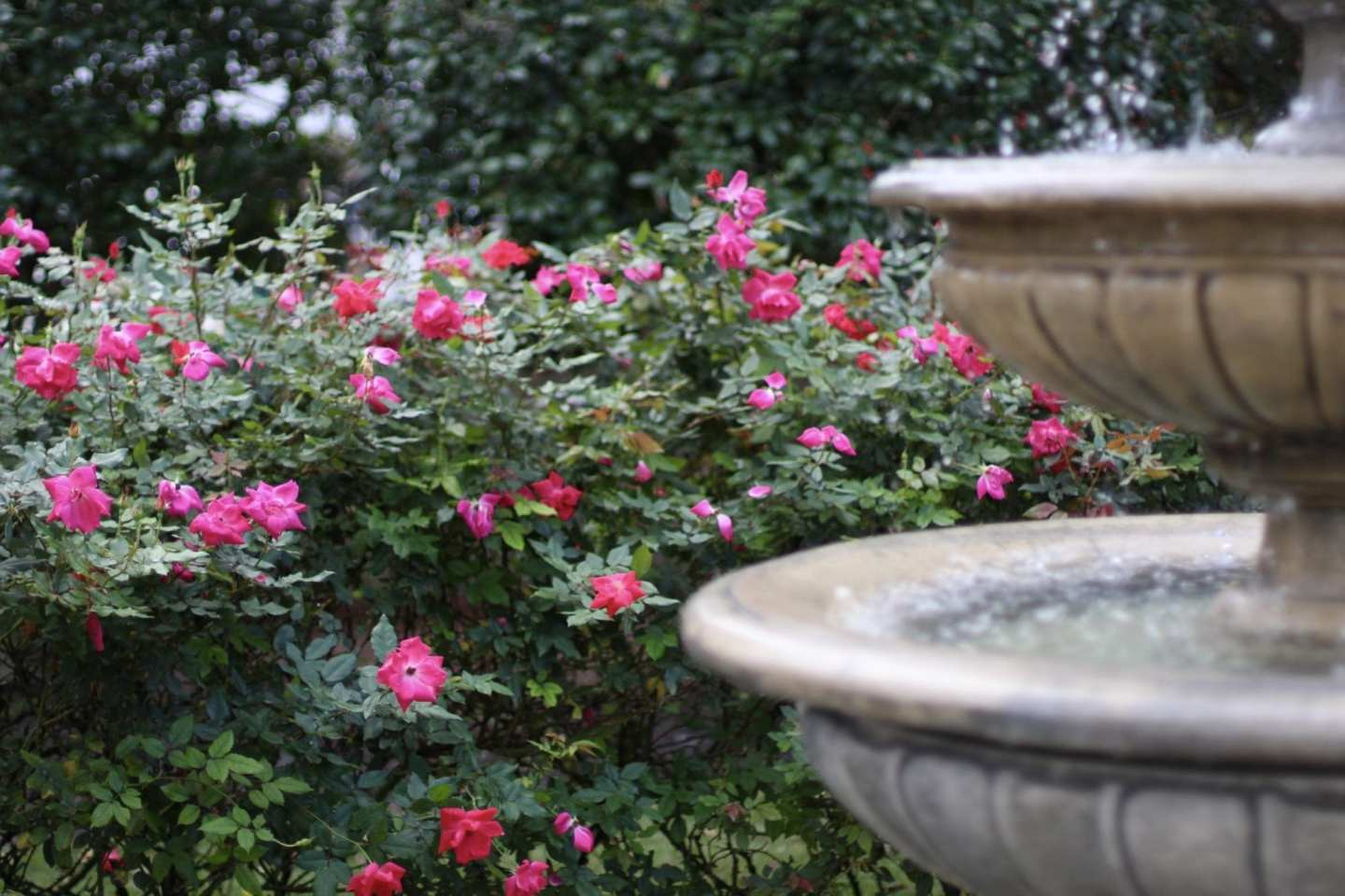 landscape inspiration with roses