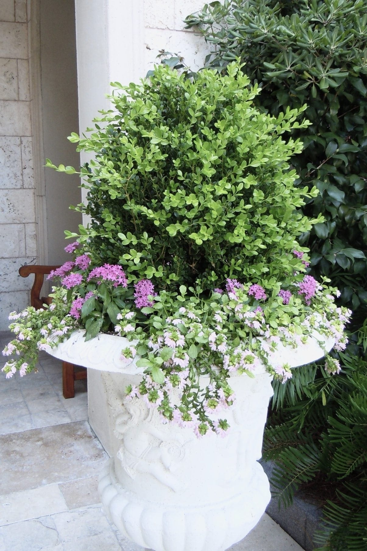 Sea Island boxwood planter.