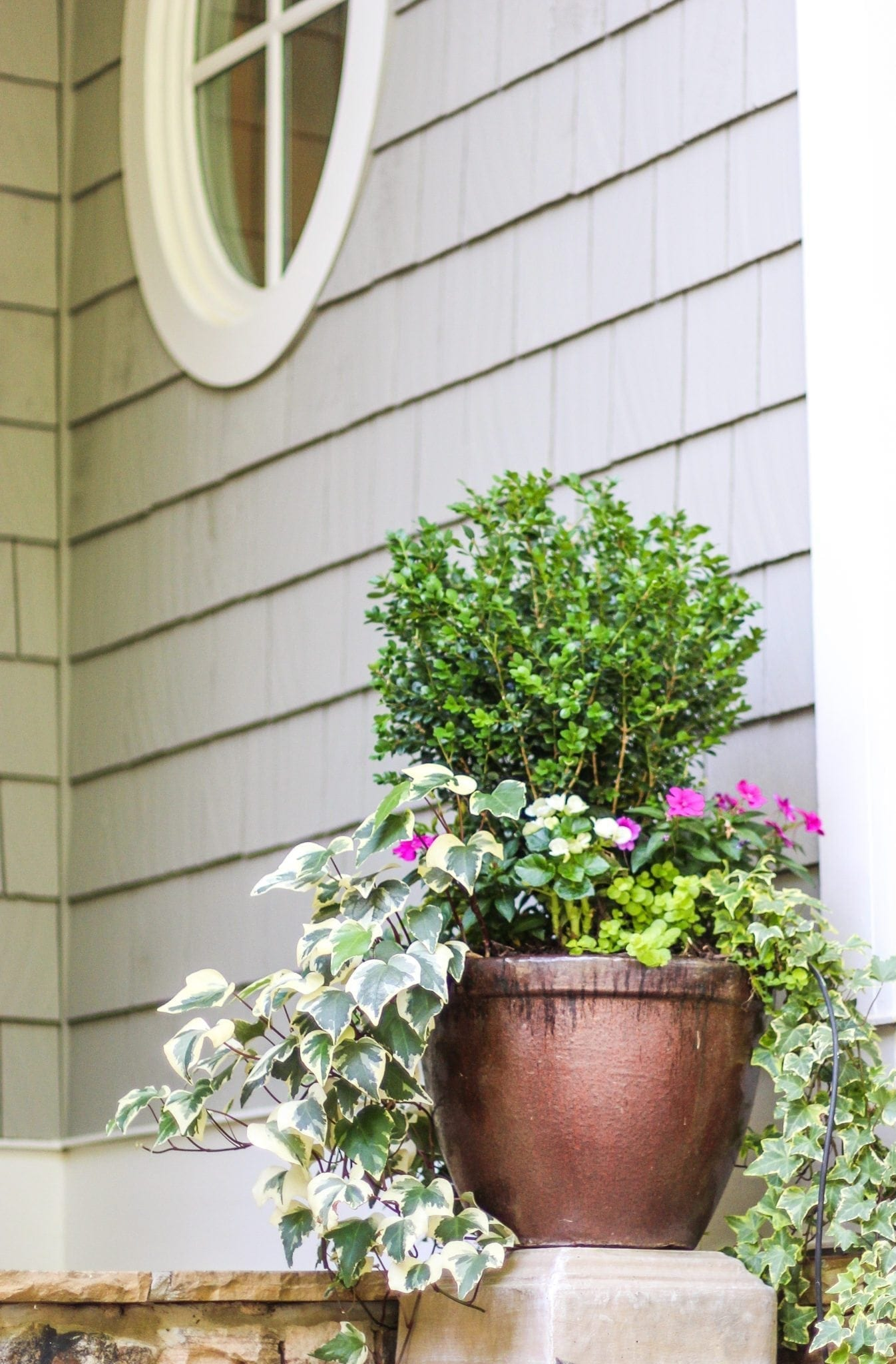 Spring container planters with boxwood and ivy and creeping jenny.