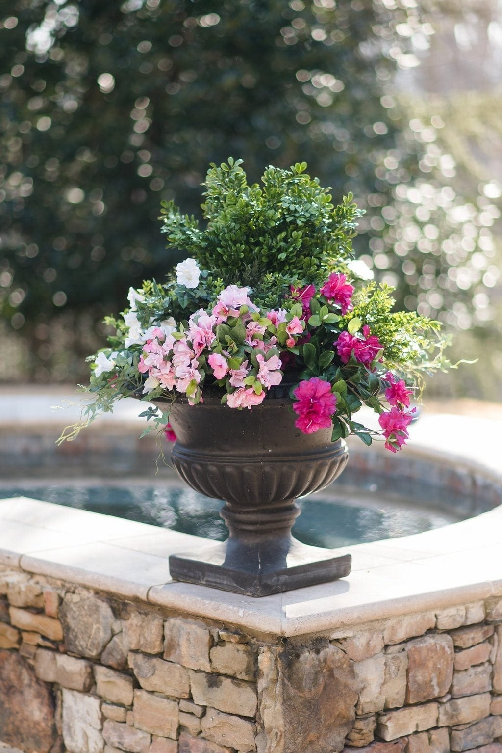Plastic boxwoods and silk azalea plants used in black flower container by pool spa.