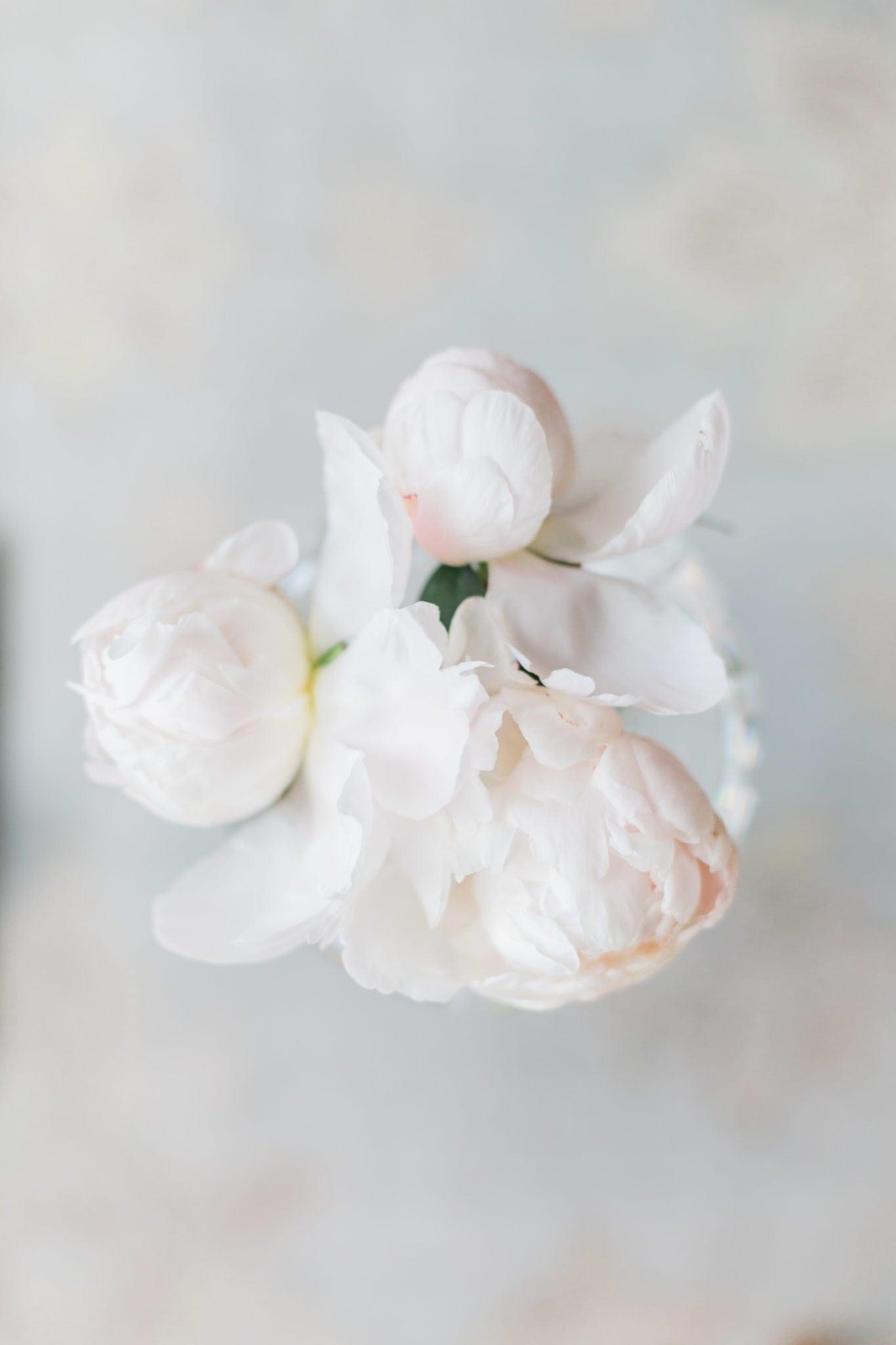 Soft pink peony petals.