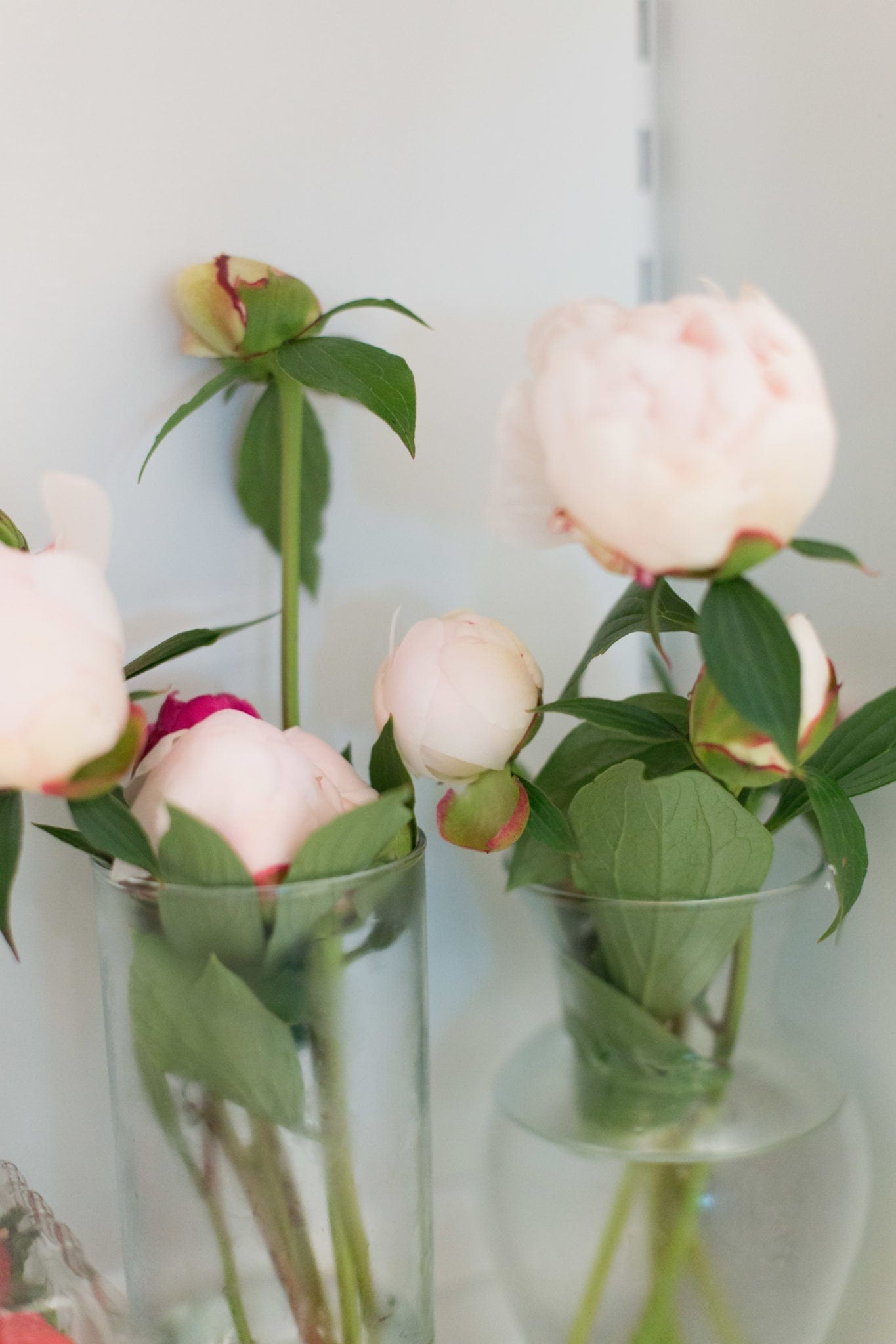 Storing peonies to bloom at a later date. Everything you need to know about how to keep peonies for months in your refrigerator.