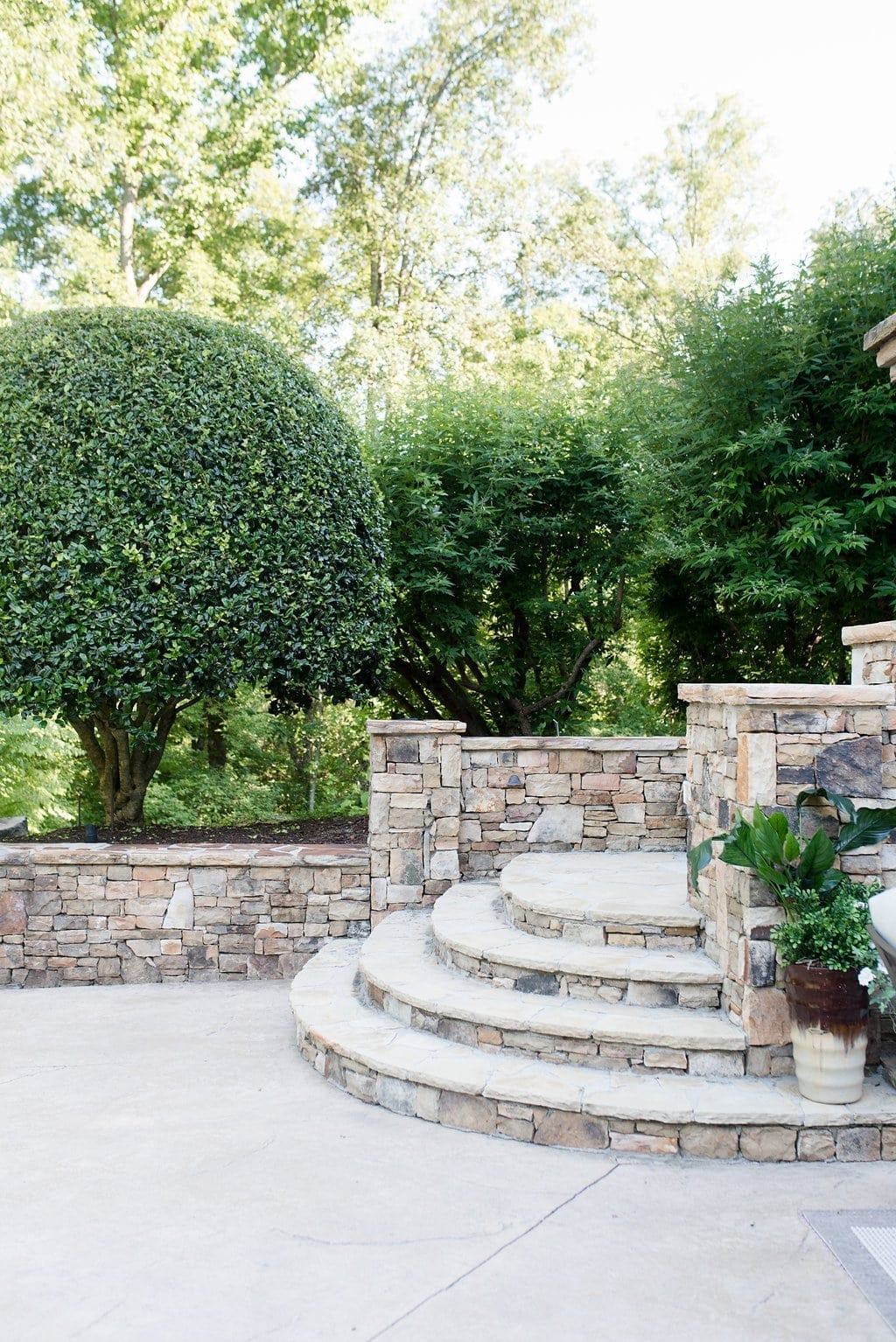 Holly tree shaped in round form with Vitex trees.