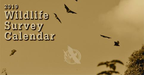 2019 Wildlife Survey Calendar