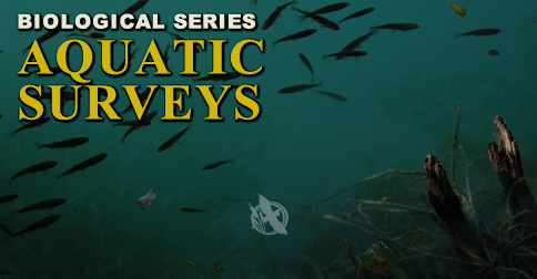 Aquatic Studies