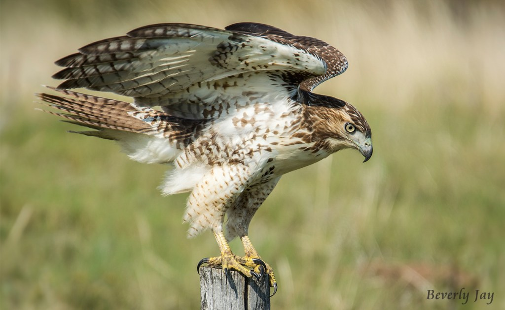 Approaching Liftoff by Beverly Jay