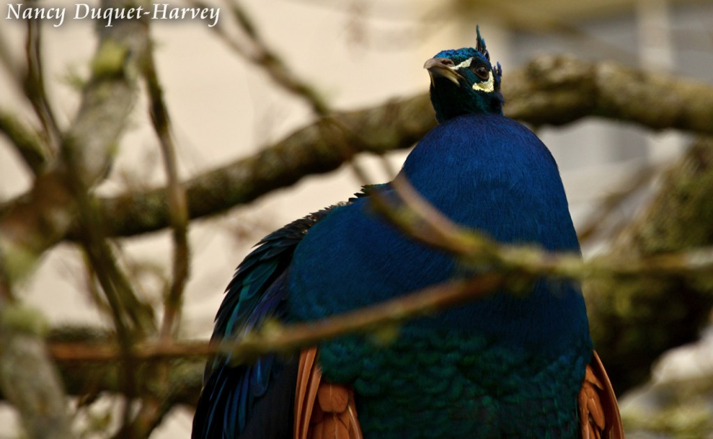 Just Hanging Out by Nancy Duquet-Harvey