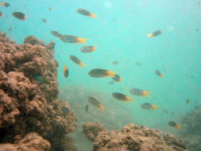 scuba diving with marine life in kata